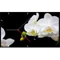 Часы настенные Time2go 1015 Орхидея белая